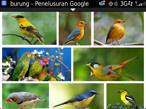 Forum Jual Beli Batu Akik Dan Burung Berkicau Di Gresik Jawa Timur